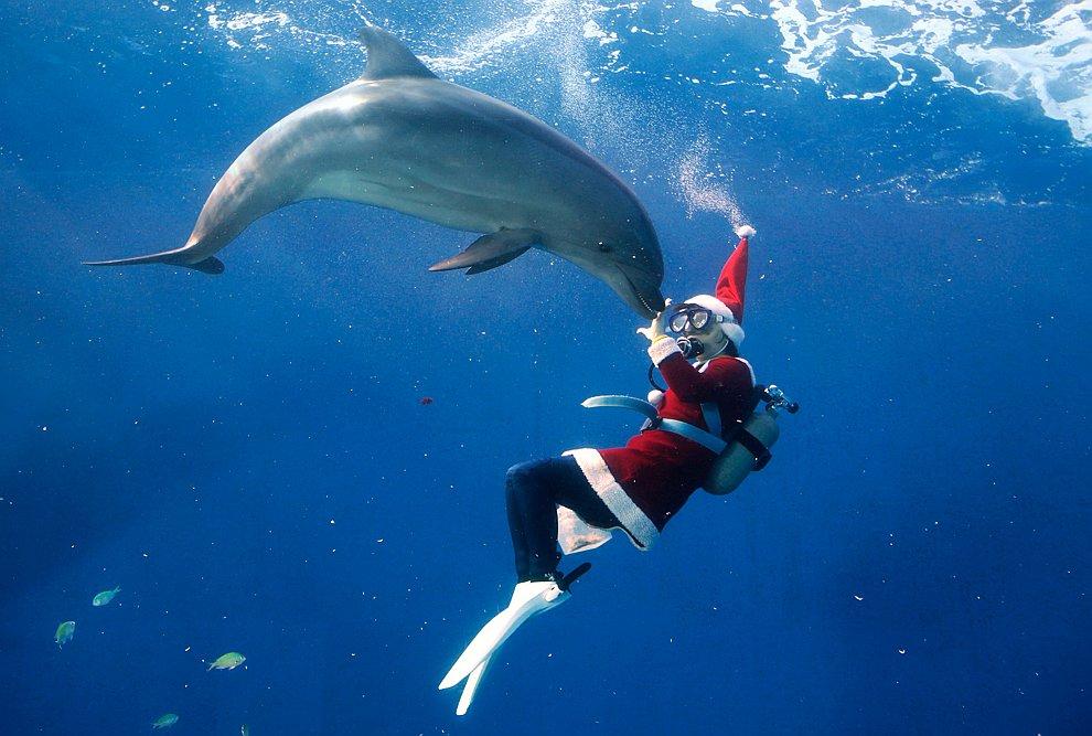 Аквалангист-Санта Клаус с дельфинами в Hakkeijima Sea Paradise в Иокогаме