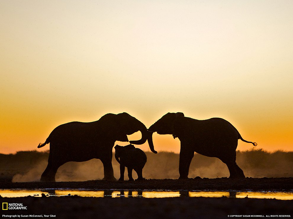 Трио слонов из Намибии