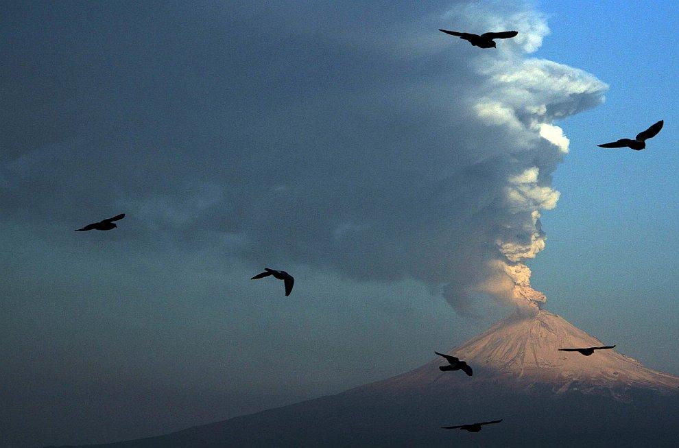 Птицы на фоне вулкана Попокатепетль