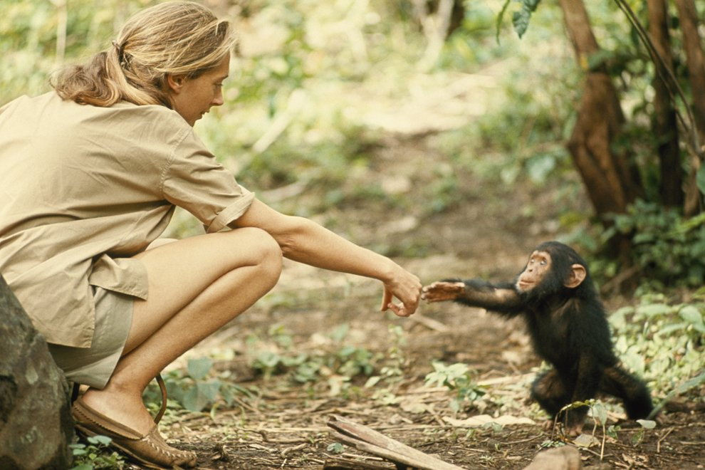 Встреча с шимпанзе в заповеднике в Танзании