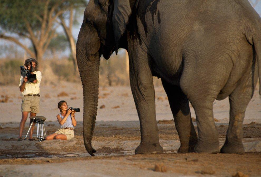 National Geographic снимает новый фильм о дикой природе в Ботсване