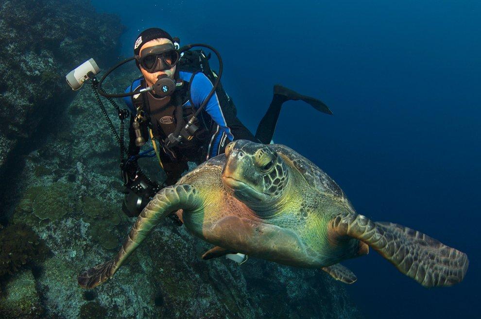 Биолог National Geographic и морская черепаха у острова Кокос, Коста-Рика