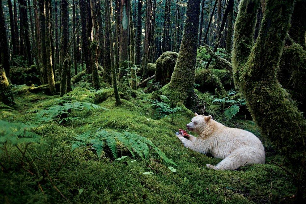 В лесах Британской Колумбии, Канада