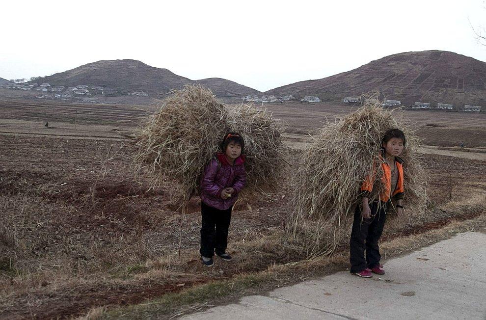 Дети с тюками сена в Южной провинции Хванхэ