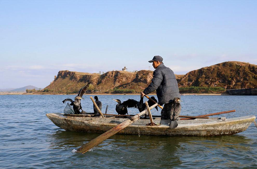 Северокорейский рыбак с бакланами на борту