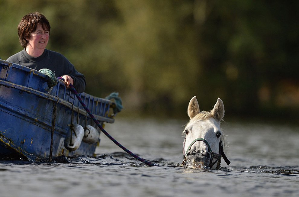 Жительница Шотландии регулярно устраивает своим лошадям физические упражнения