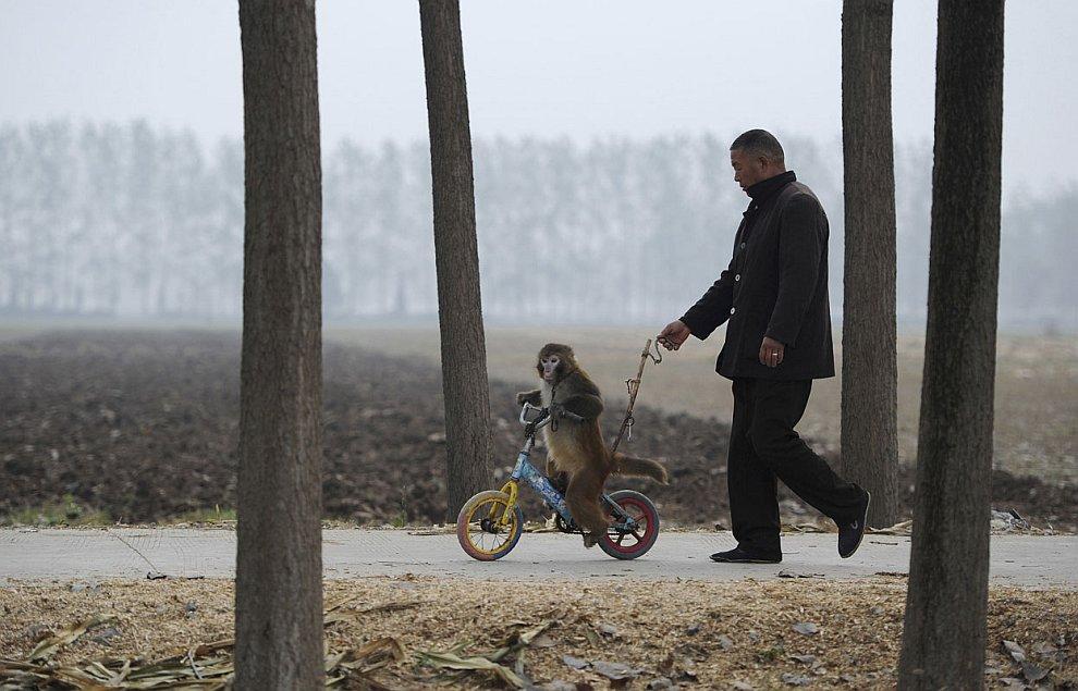 В округе Сучжоу в китайской провинции Аньхой работают около 300 цирковых трупп