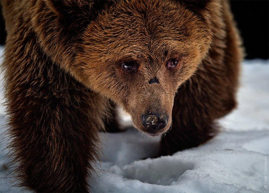 Реабилитационный центр для бурых медведей