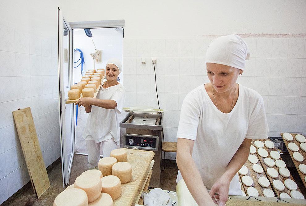 Как открыть частную сыроварню Мог спрашивать