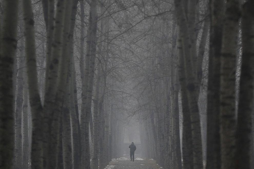 Туманный лес в Пекине