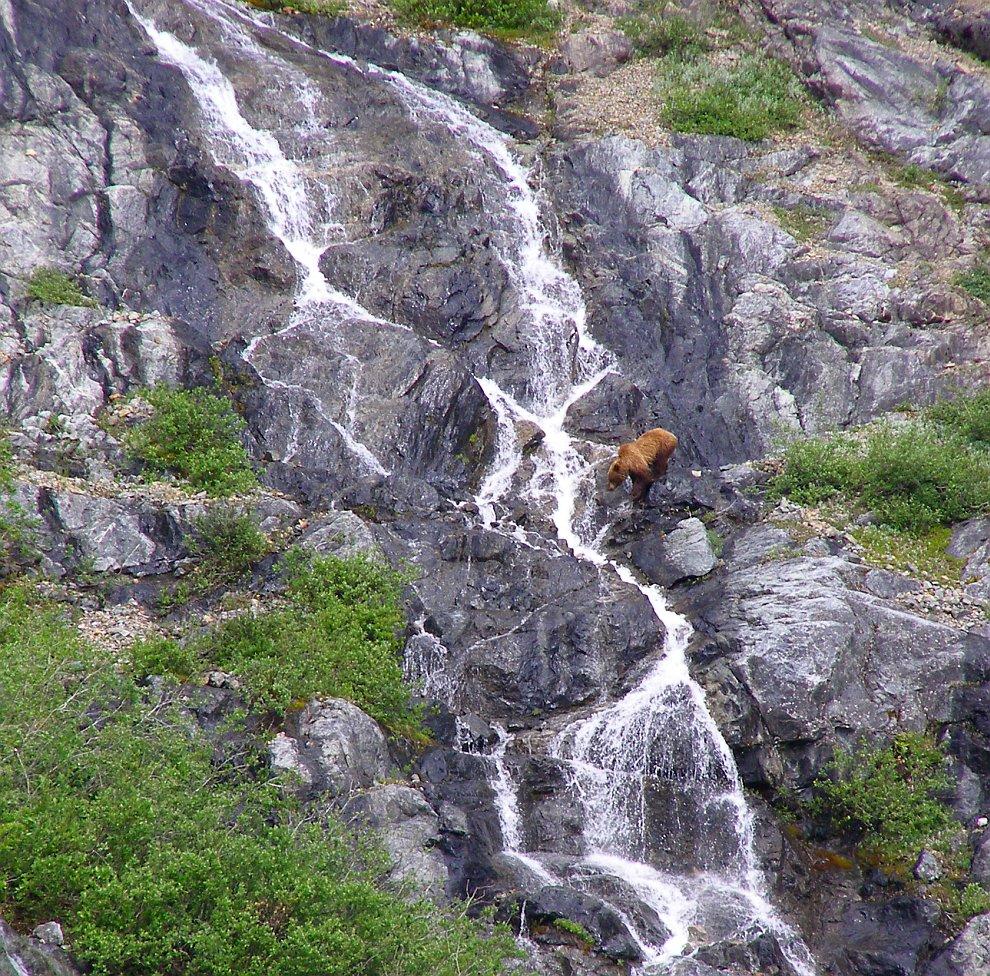 Медведь у водопада