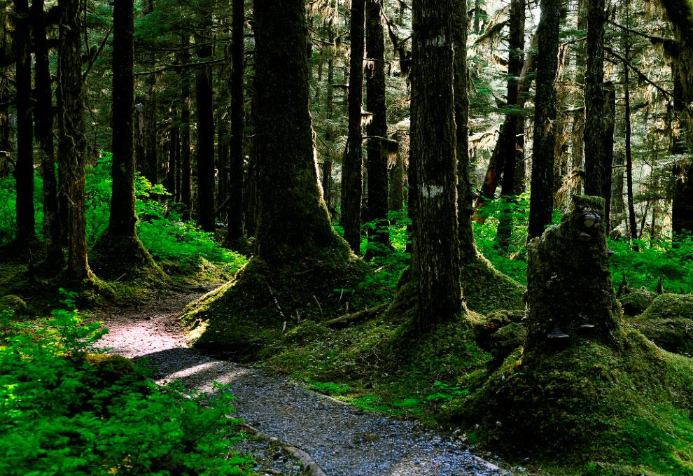 Национальный парк Глейшер Бей — это не только ледники, но и красивые, таинственные леса