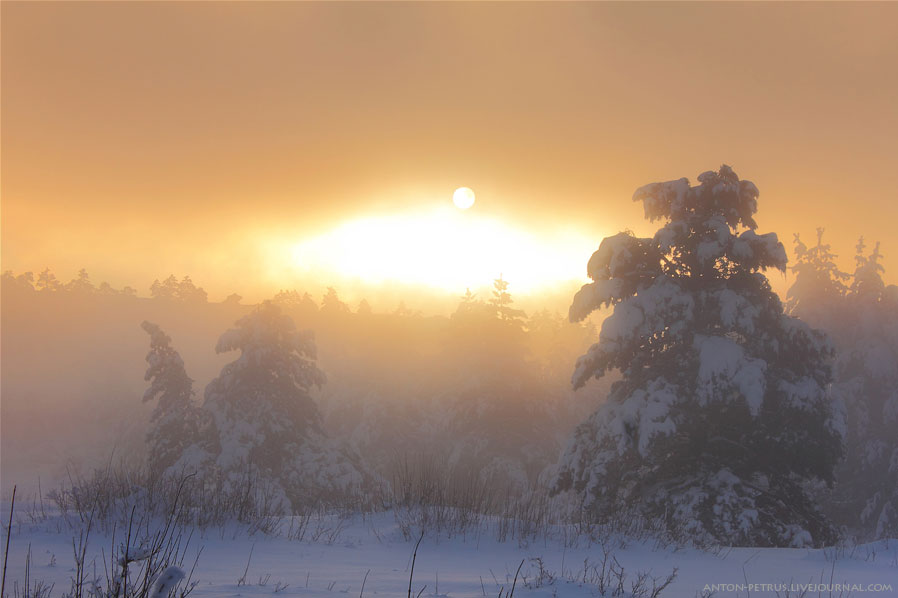Misty sunrise in winter forest