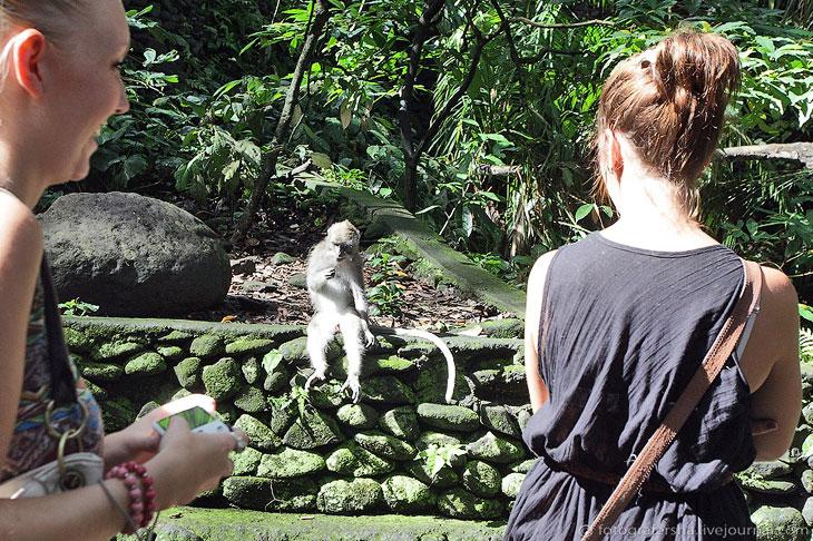Обезьяний лес на Бали