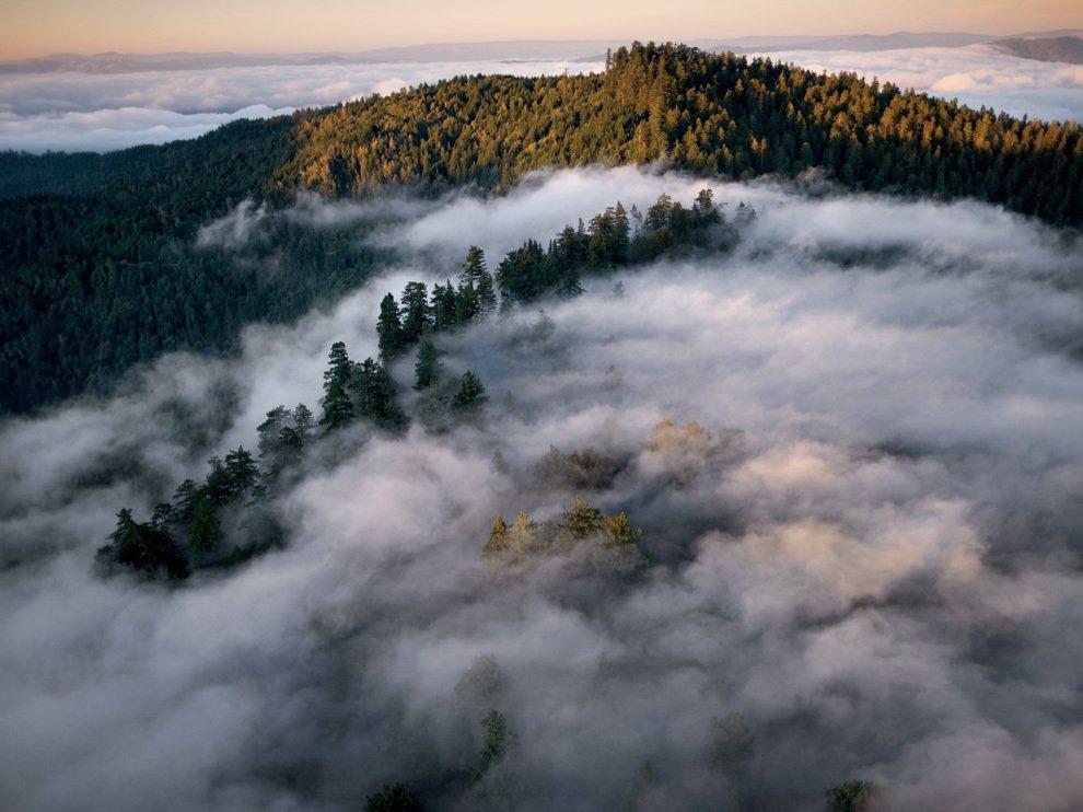 Лес великанов