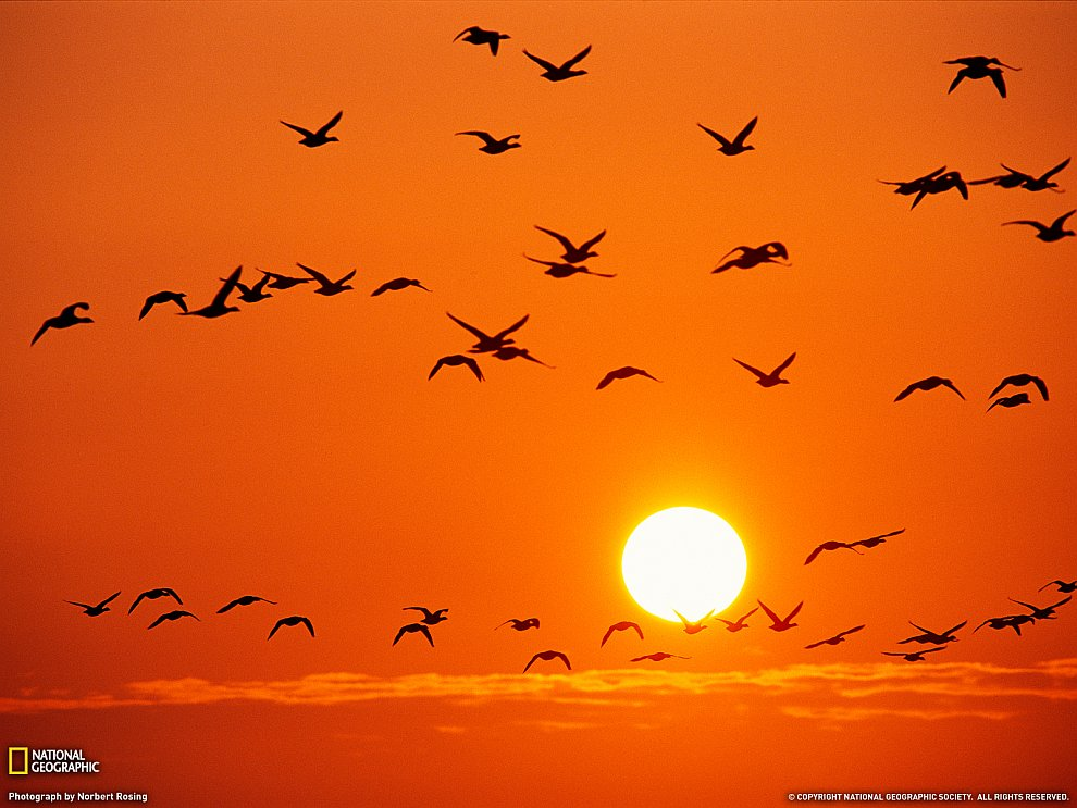 Птицы из Германии