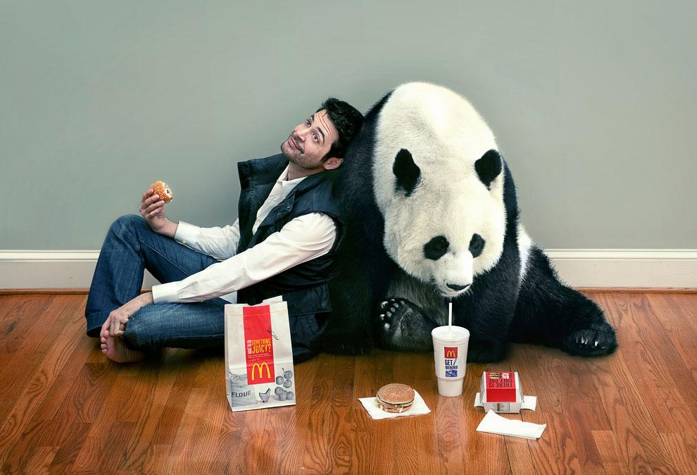 Большие панды или бамбуковые медведи