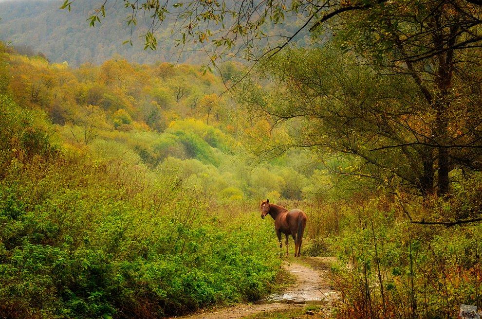 Лошадка обернулась перед уходом в осенний лес