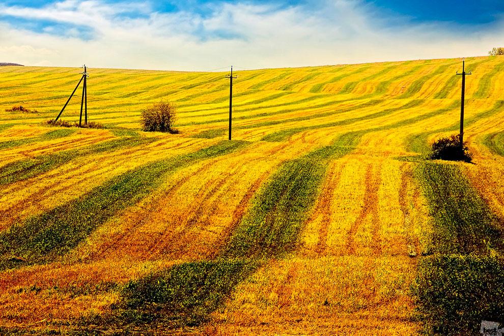 Скошенное поле под Иркутском