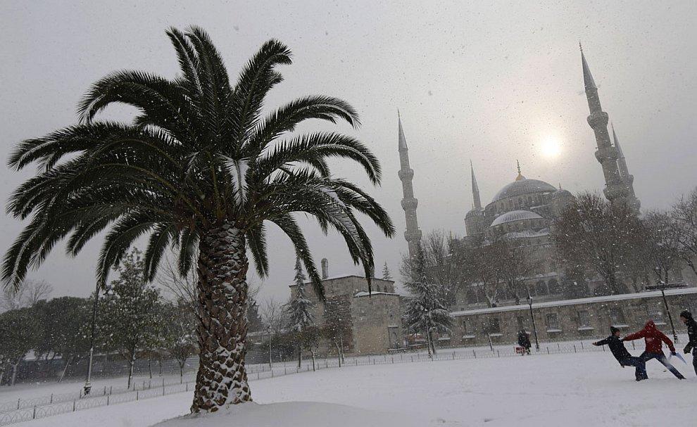 Пальма и Голубая мечеть — одна из самых красивых мечетей Стамбула — во время снегопада