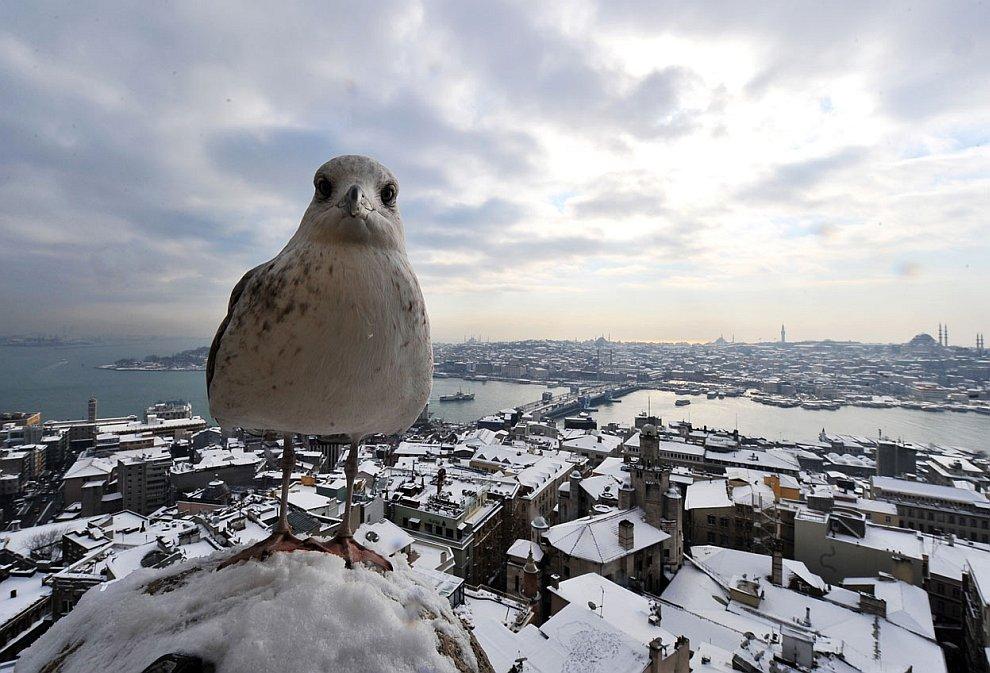 Чайка на башне Галата в центре Стамбула
