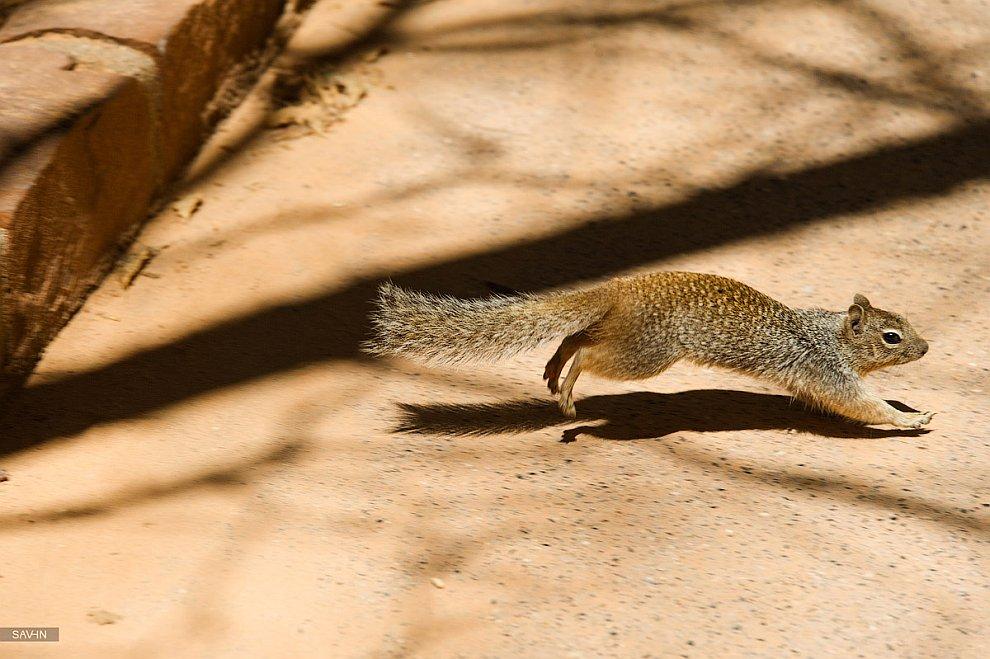 Национальный парк Зайон. Часть 2