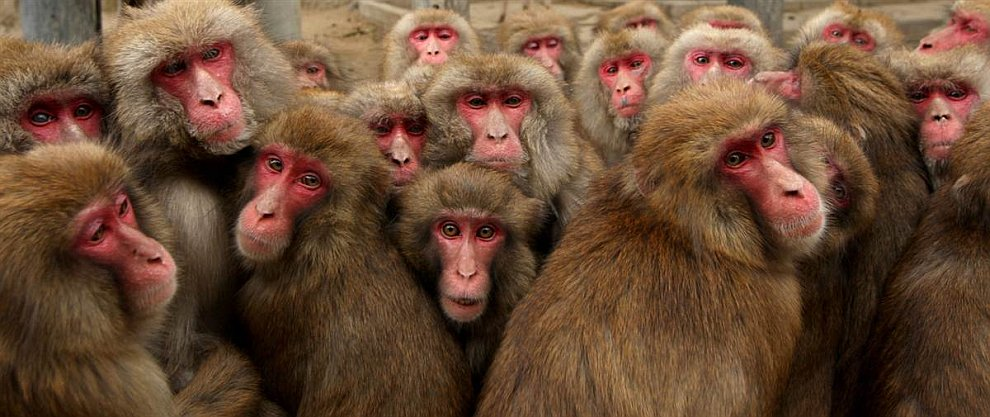 Парк обезьян в городе Сумото, Япония