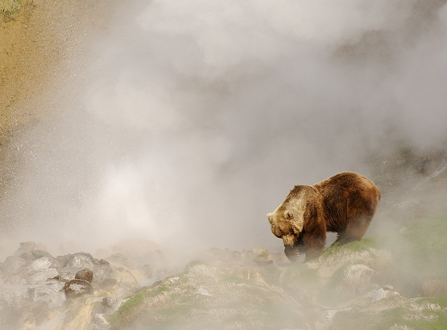 Steambath for a bear