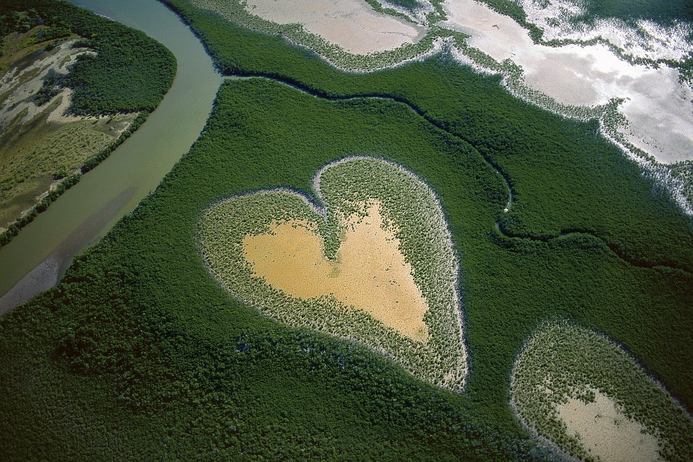 Естественное образование мангровой растительности, которая по форме напоминает сердце