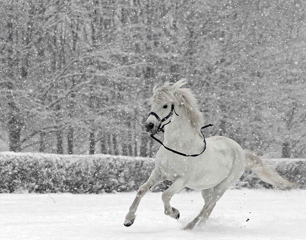 Белый конь на белом снегу — классика зимних сказок