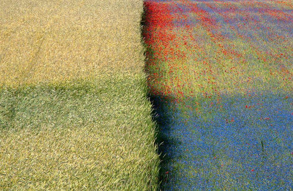 Цветущее поле в Италии