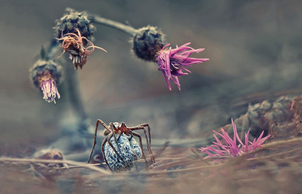 Добро пожаловать в мир пауков!