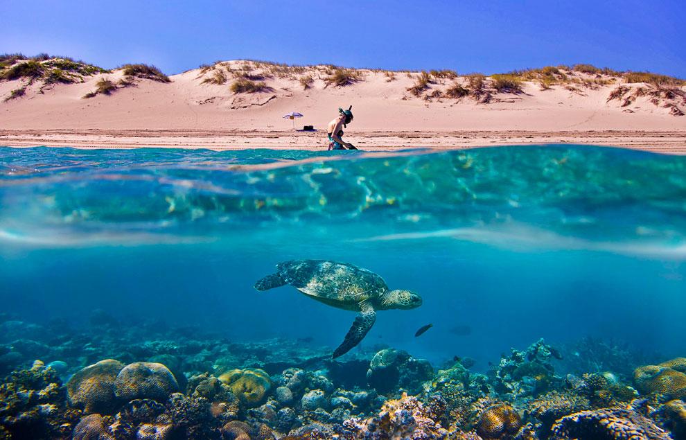 На австралийском побережье