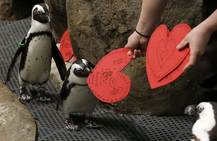 День святого Валентина 2013