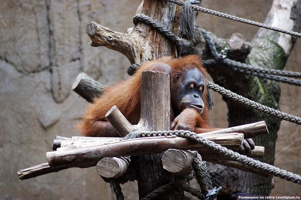 В зоопарке Лейпцига