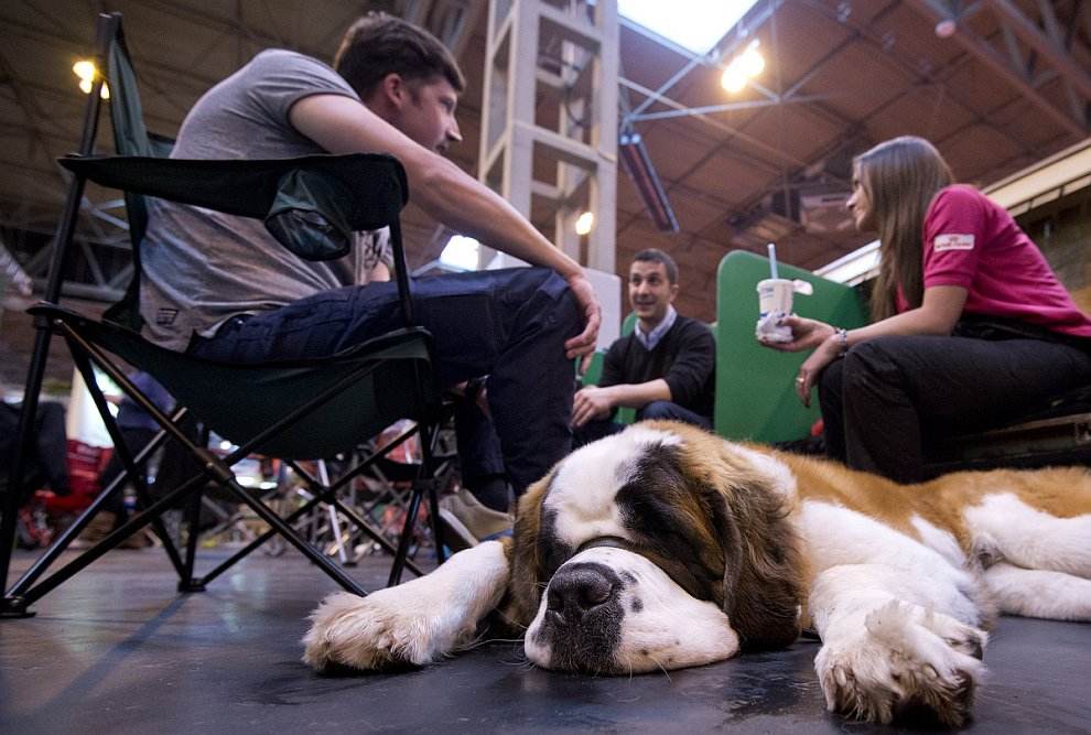 Выставка собак Crufts Dog Show 2013