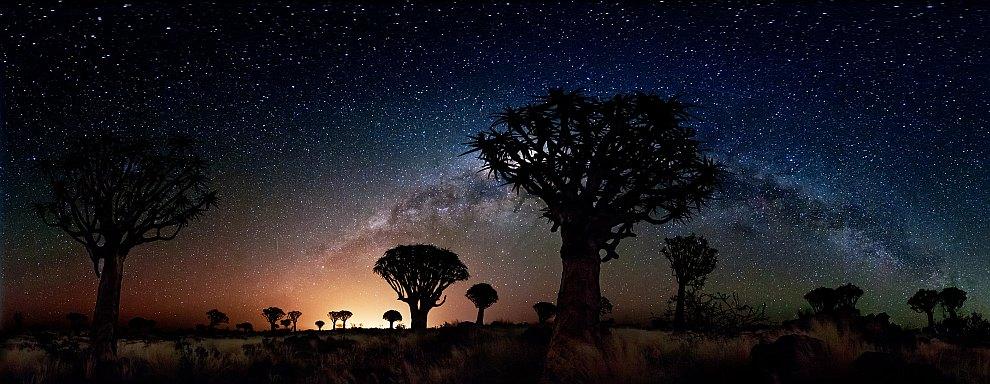 Лес колчановых деревьев ночью