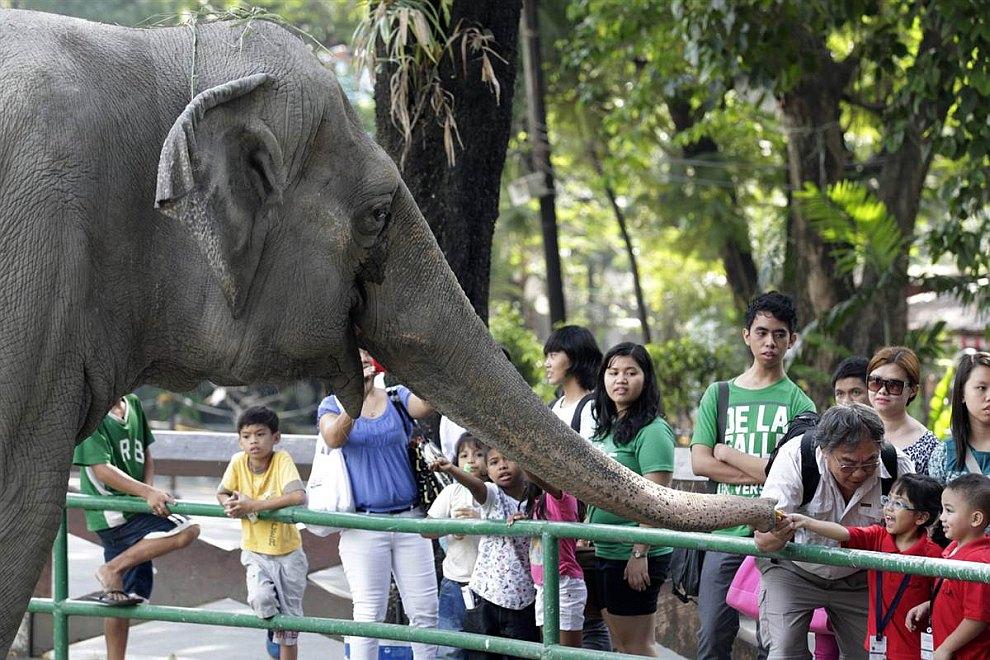 38-летний азиатский слон общается с посетителями в зоопарке на Филиппинах