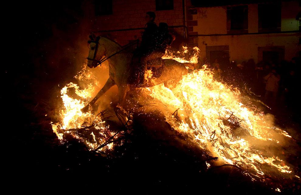 В Испании прошли традиционные празднования в честь аббата Святого Антонио — покровителя домашних животных