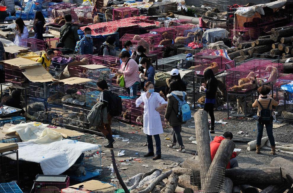 На шоссе у города Чунцин добровольцы задержали грузовики с 900 собаками, предназначавшимися для ресторанов в провинции Гуандун на юге Китая