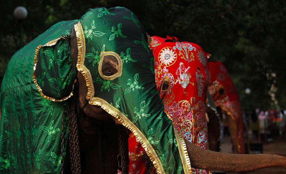 Празднование полнолуния Навам (Navam Perahera) — важного события из истории буддизма