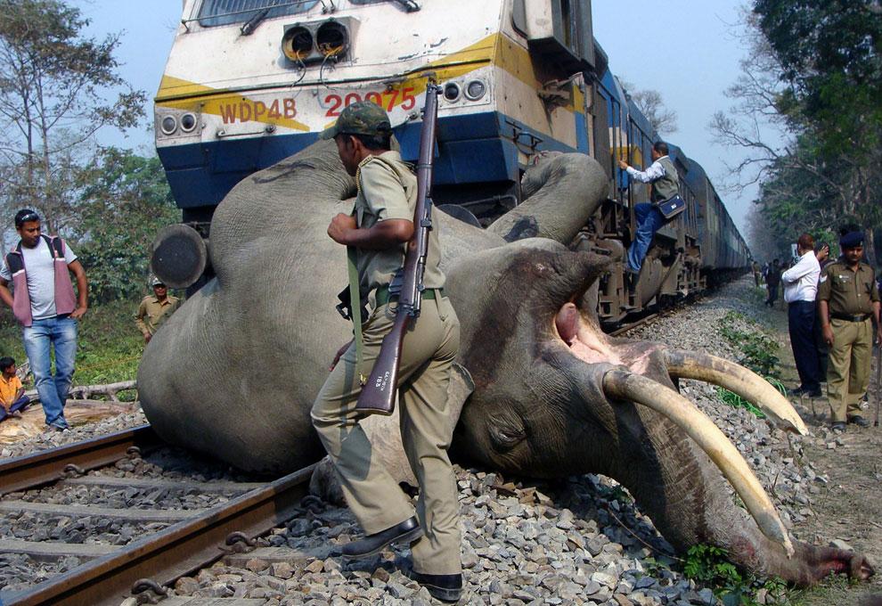 Поезд сбил слона в штате Западная Бенгалия на востоке Индии