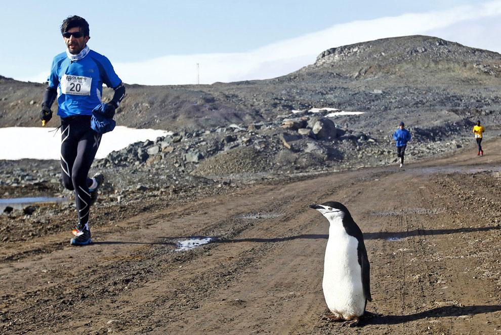 1 марта 2013 в Антарктике впервые состоялся марафон. Пятьдесят два участница из разных стран вышли на дистанцию