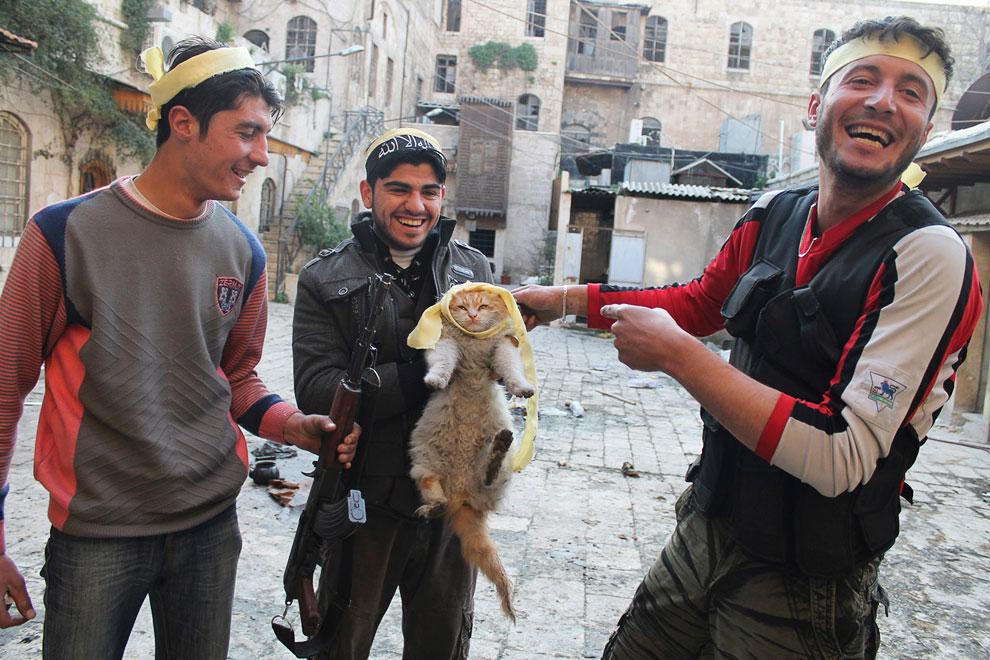 Мятежники в перерыве между стрельбой играют с кошкой в старом городе Алеппо