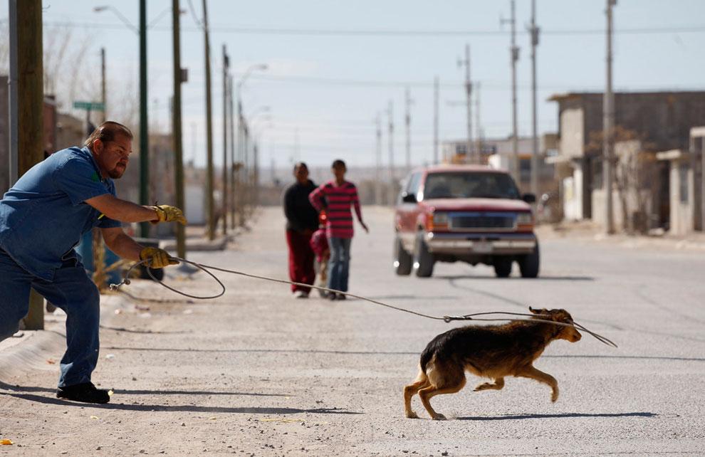 Отлов бродячих собак в городе Сьюдад-Хуарес, Мексика