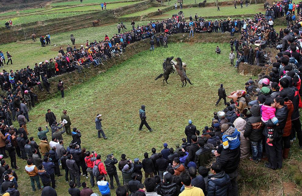 Традиционные лошадиные бои с 500-летней историей. Гуанси-Чжуанский автономный район, Китай