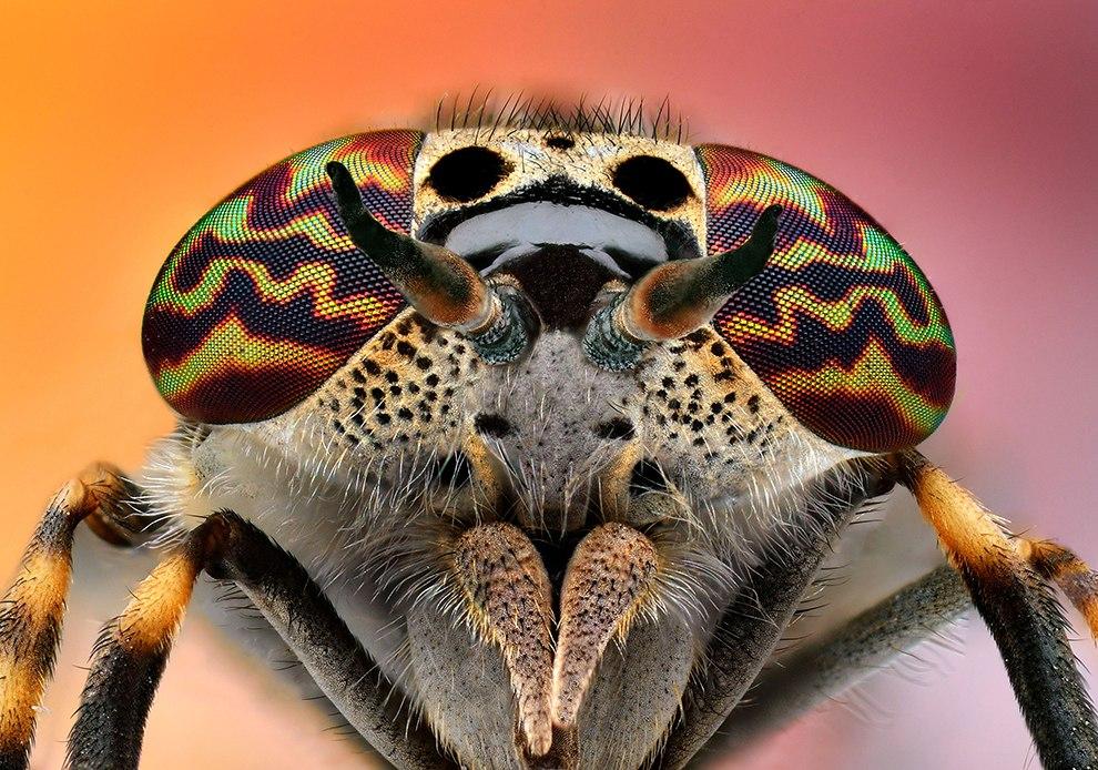 Еще несколько портретов насекомых