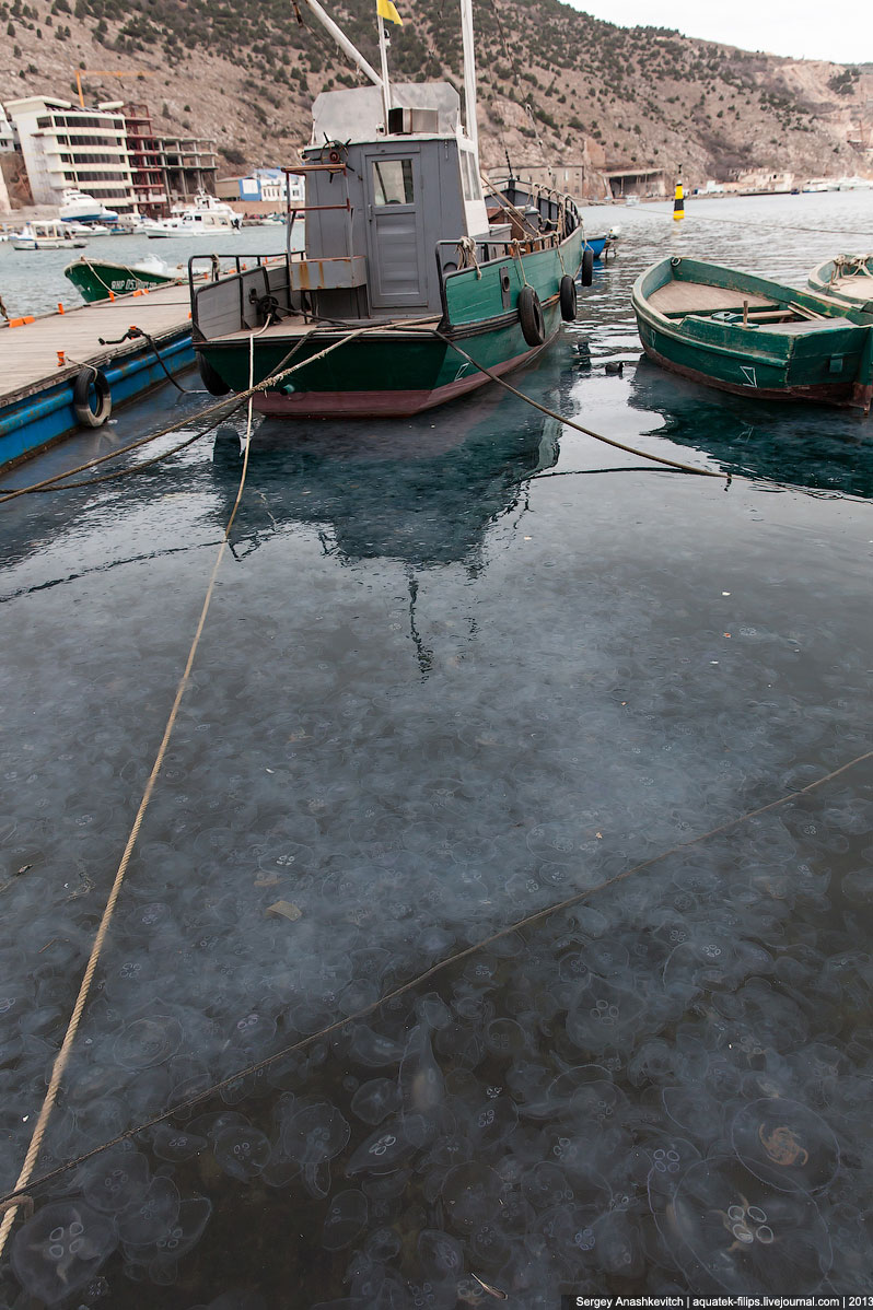 Нашествие медуз в Севастополе