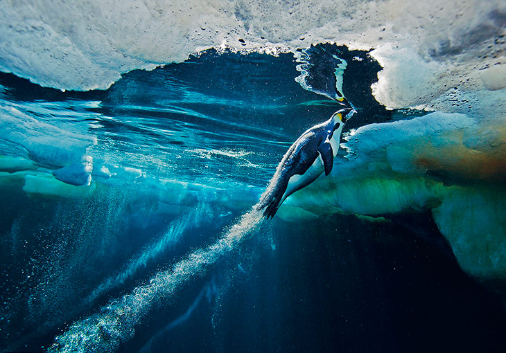 National Geographic: лучшие фотографии марта