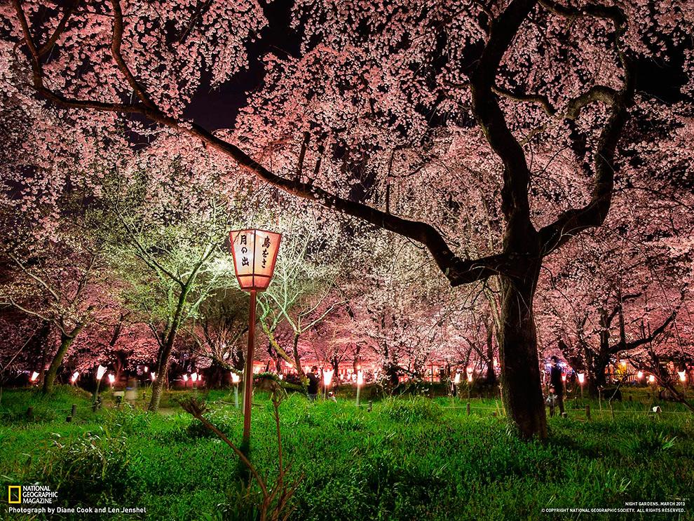 Вишневый сад, Япония